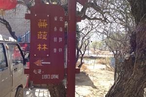 刘家峡蒹葭林农家园(临夏)