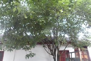 广元春满园农家乐